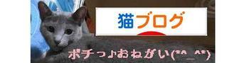 Kiruko_banner5_2